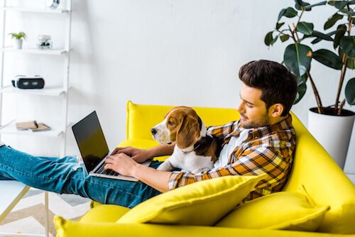 A white man with dark hair sits on a yellow couch with his dog and laptop