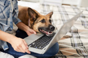 A woman uses a laptop while her German Shepherd dog rests its chin on her laptop