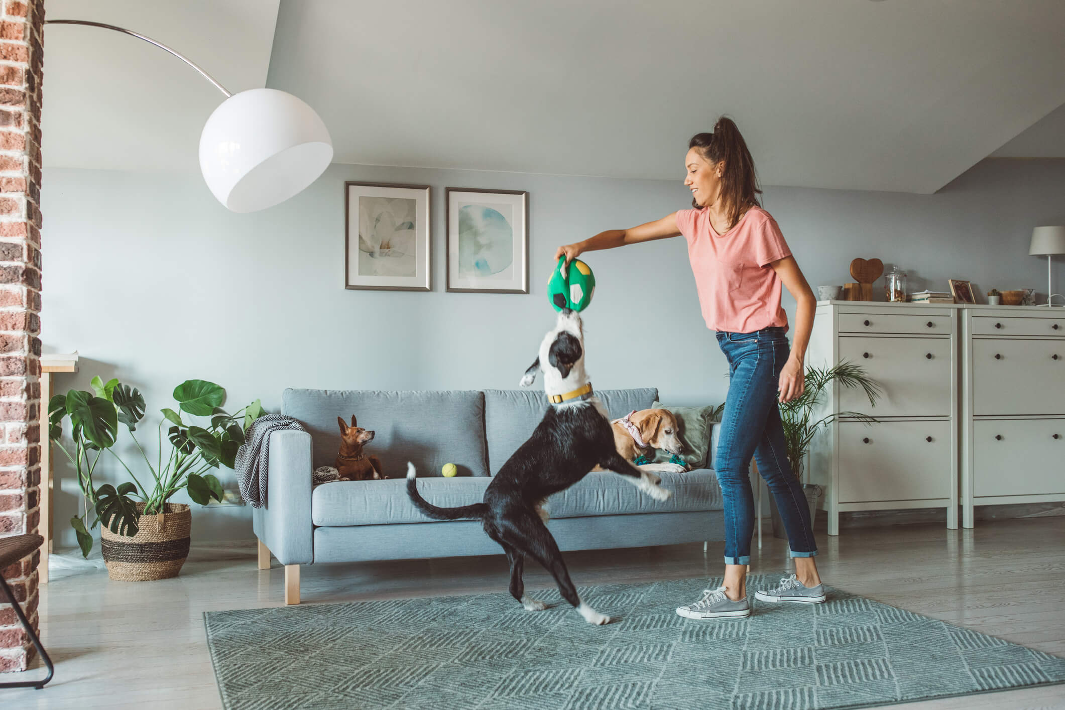 Woman playing with a dog in the living room of a house